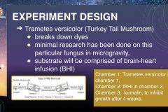 DreamUp-Launch-Team-Myco-Materials-Presentation.6