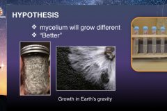 DreamUp-Launch-Team-Myco-Materials-Presentation.8