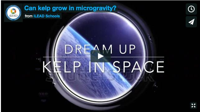 Dreamup Kelp in Space